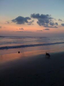 犬と椰子の実